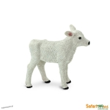 Cielę Rasy Brown Swiss